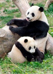 Google Panda Search Engine Optimization Update 101